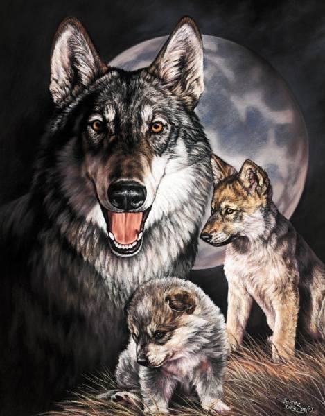 Bilde av Wolf Experience
